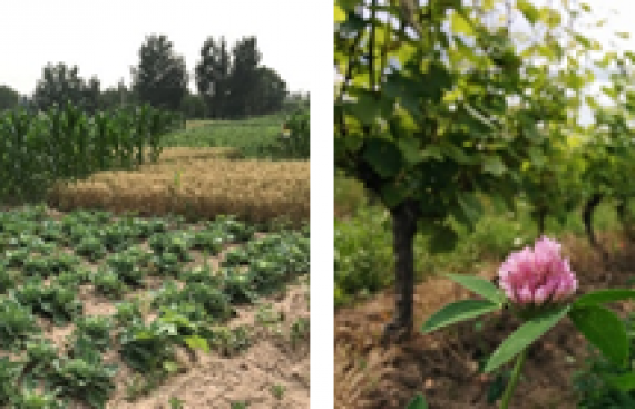Promising results in assessing new methods in IPM